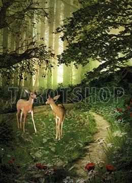 Bild på Magic Reindeers